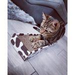 Tiragraffi-Home-Decor-gatti