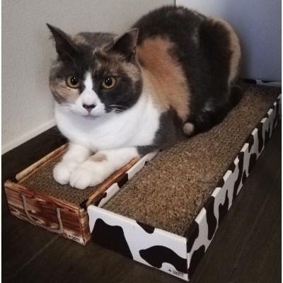 Tiragraffi-Home-Decor-gatto